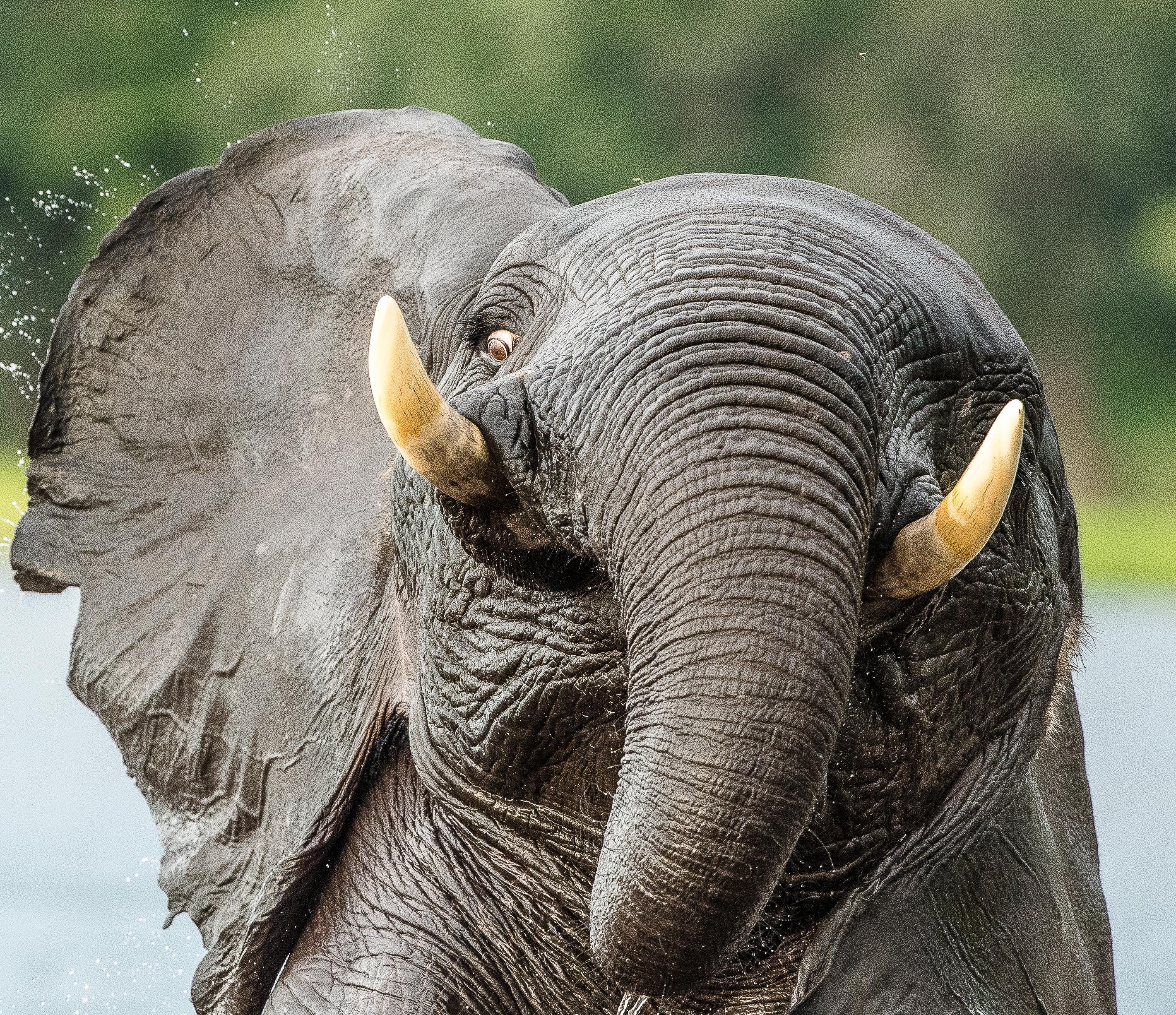 one ear elenosig
